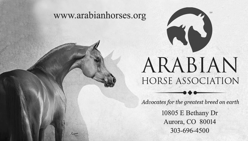 ArabianHorseAssociation copy2